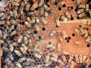 Méhpempő és teherbeesés mely egy csodálatos adomány