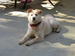 Az Acana Puppy Large Breedet szeretik a kutyusok